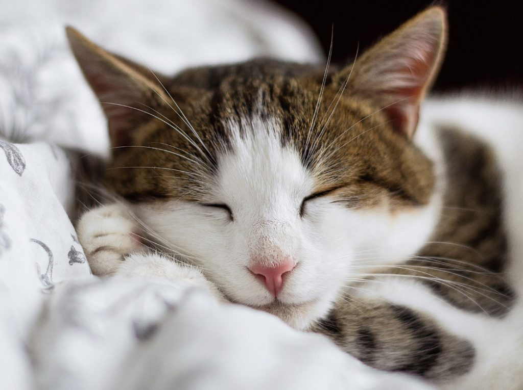 新しい猫を家族に迎える前に